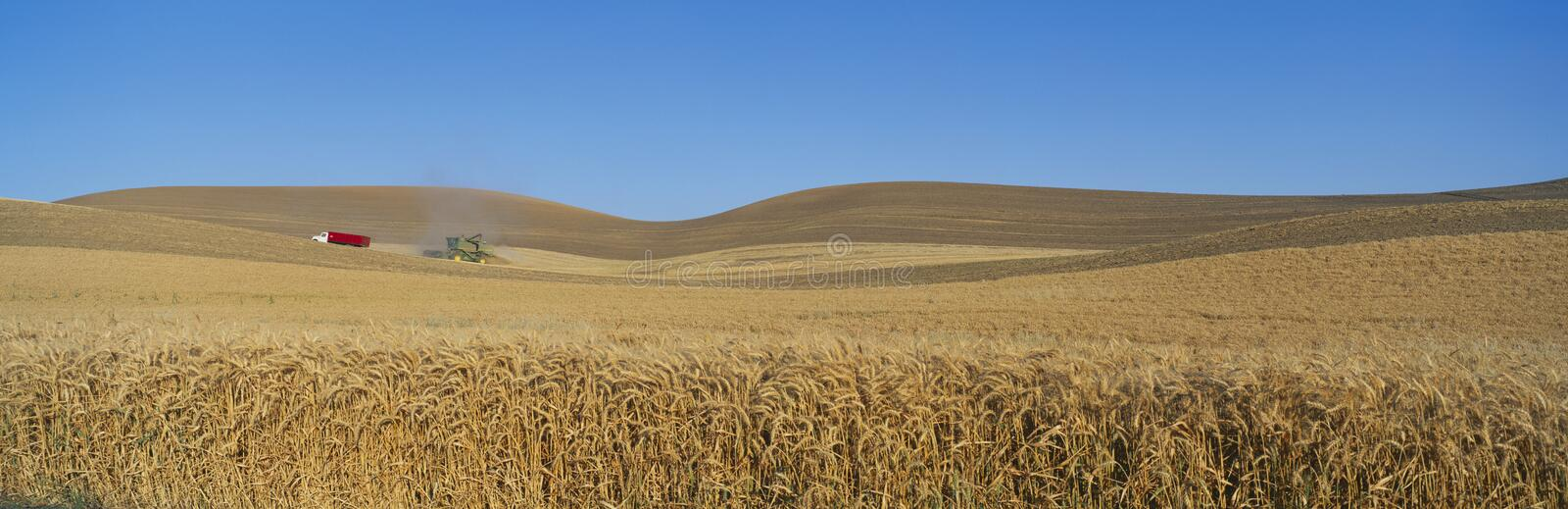 Download Wheat Harvest, stock photo. Image of ecosystem, contour - 23171240