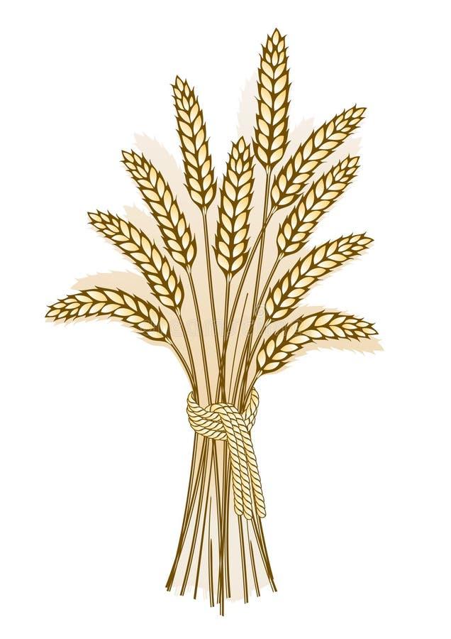 Wheat harvest. Detailed illustration of ripe ears for designs vector illustration