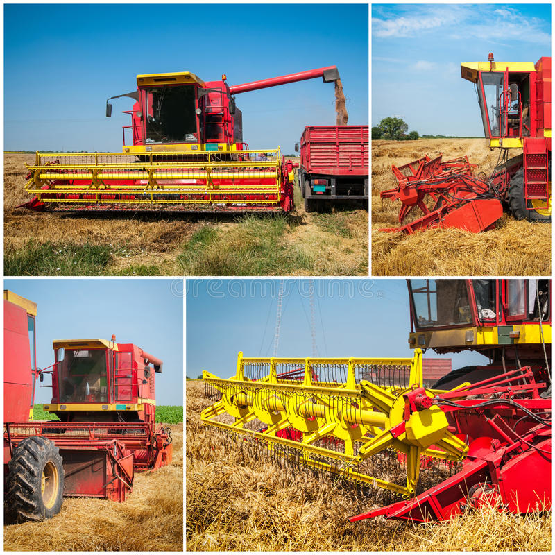 Wheat harvest collage. Wheat harvest with blue sky collage stock image
