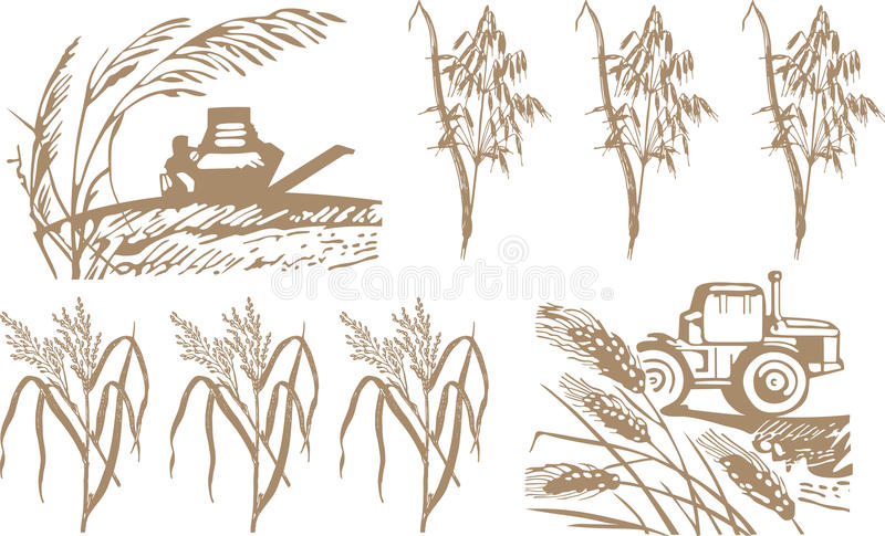 Wheat, harvest and machinery. For all design conditions royalty free illustration