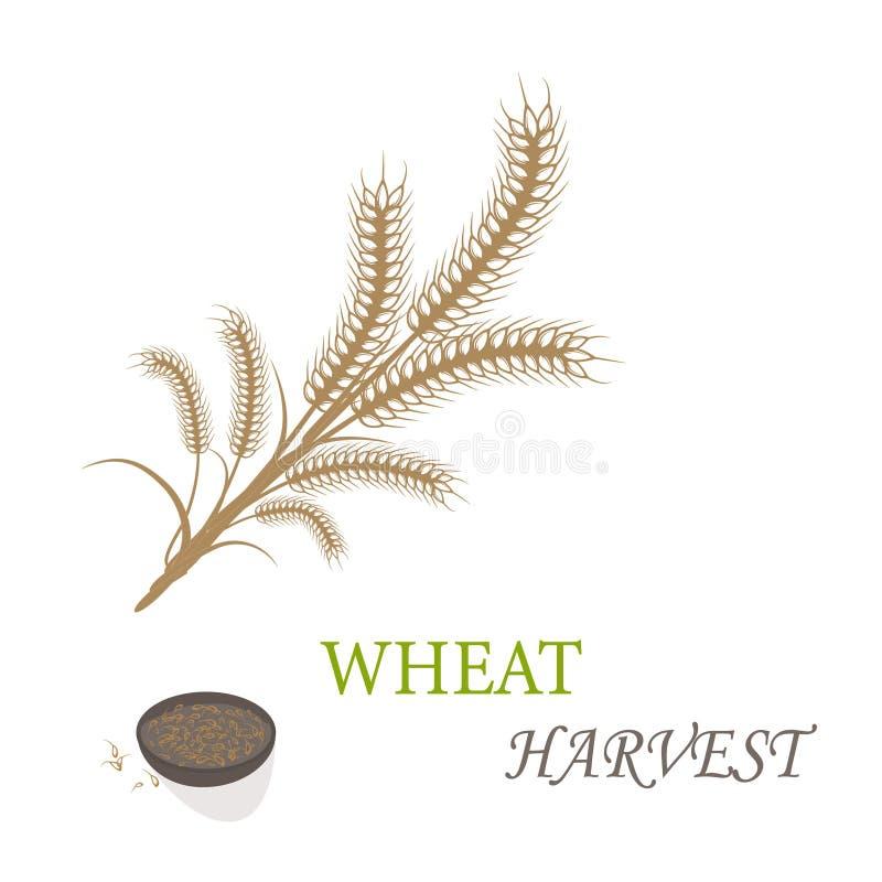 Wheat harvest. Season symbol and idea vector illustration