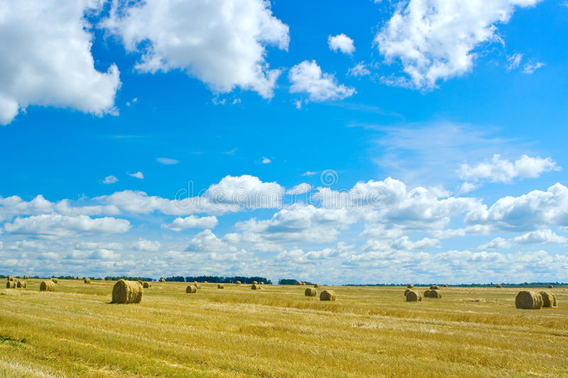 Download Wheat harvesting stock photo. Image of nature, gold, harvesting - 10150788