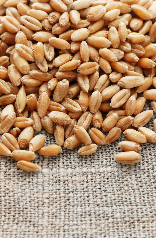 Wheat on a hessian. Grain of the wheat on a hessian stock photography