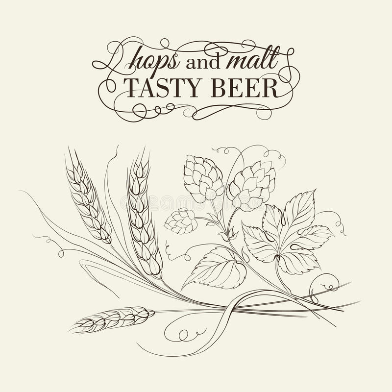 Wheat and hop on sepia. Vector illustration royalty free illustration