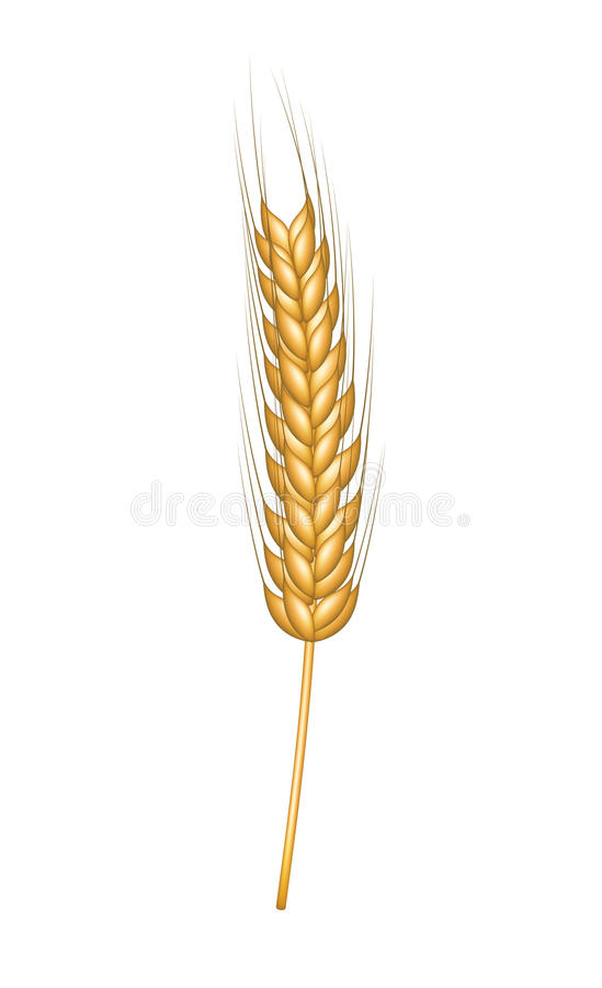 Free Wheat In Gold Design Royalty Free Stock Photos - 29514598