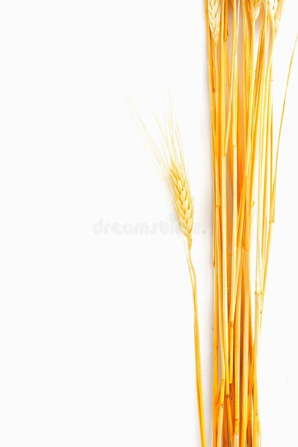 Wheat isolated on white royalty free stock image