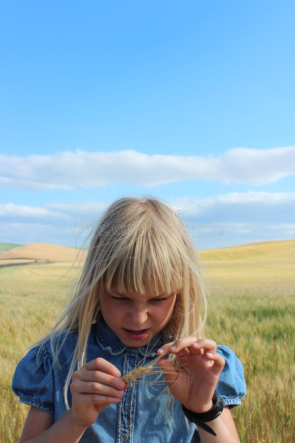 Wheat Kernel Girl royalty free stock images