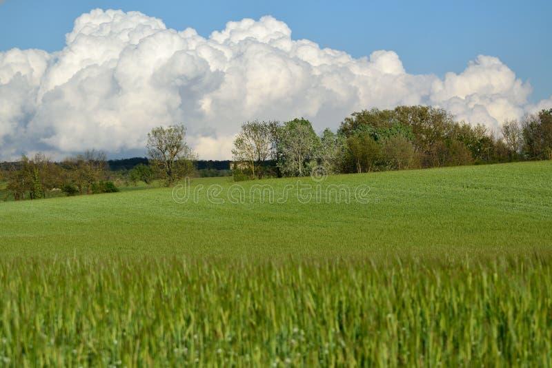 Wheat landscape stock photography