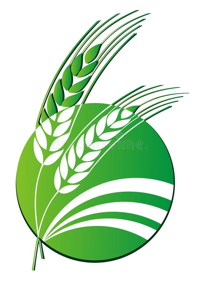 Wheat logo. Vector illustration on white