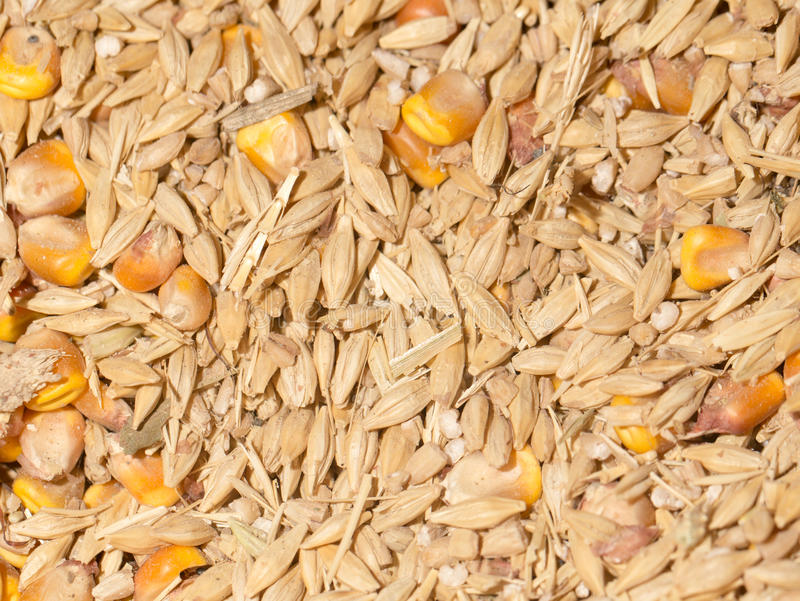 Wheat and maize stock images
