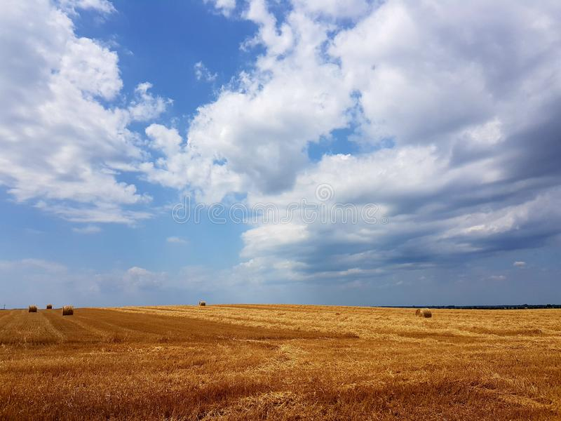 Wheat meadow on a summer day stock photography