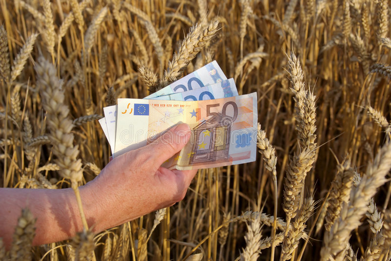 Wheat and money royalty free stock photos