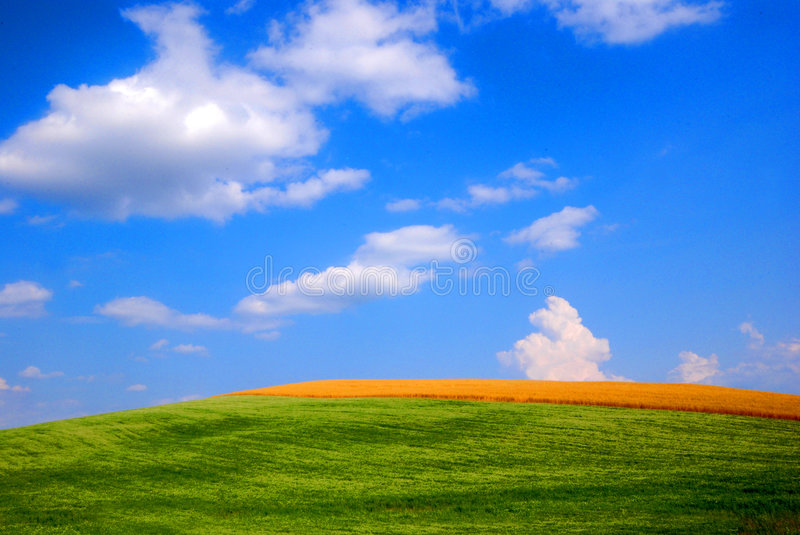 Wheat and oat fields royalty free stock photos