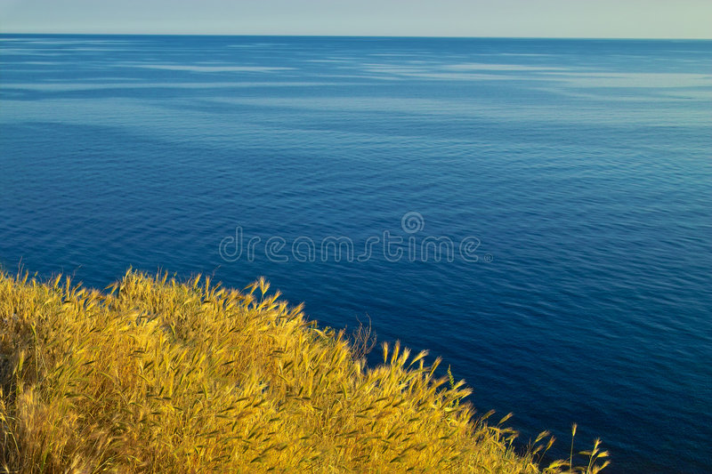 Download Wheat and ocean stock image. Image of grass, peace, landscape - 235379