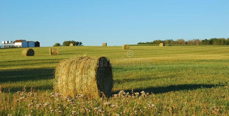 Download Wheat pack stock photo. Image of pack, outdoor, august - 4320746