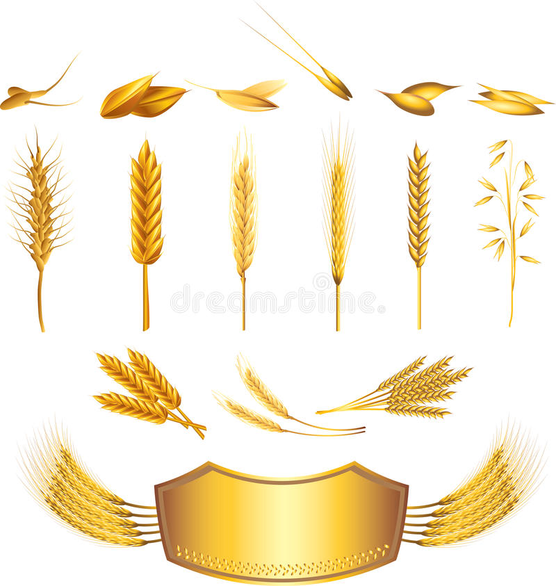 Wheat photo-realistic set. Wheat photo-realistic detailed set stock illustration