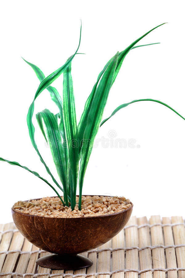 Download Wheat plant in wheat stock image. Image of health, ingredient - 18016699