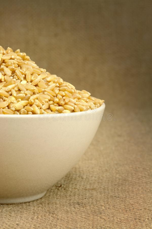 Wheat on porcelain cup. Front view stock images