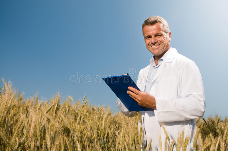 Wheat quality control royalty free stock image