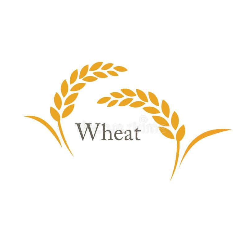 Wheat rice spike royalty free stock photos
