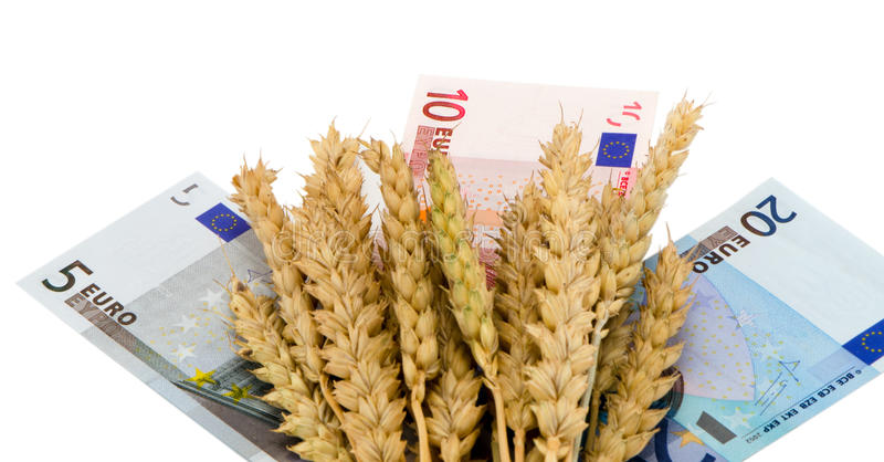 Wheat ripe harvest ears euro cash banknote white royalty free stock photo