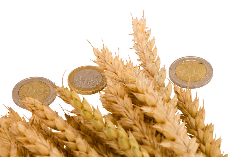 Download Wheat Ripe Harvest Ears Euro Coins Isolated White Stock Image - Image: 26987291