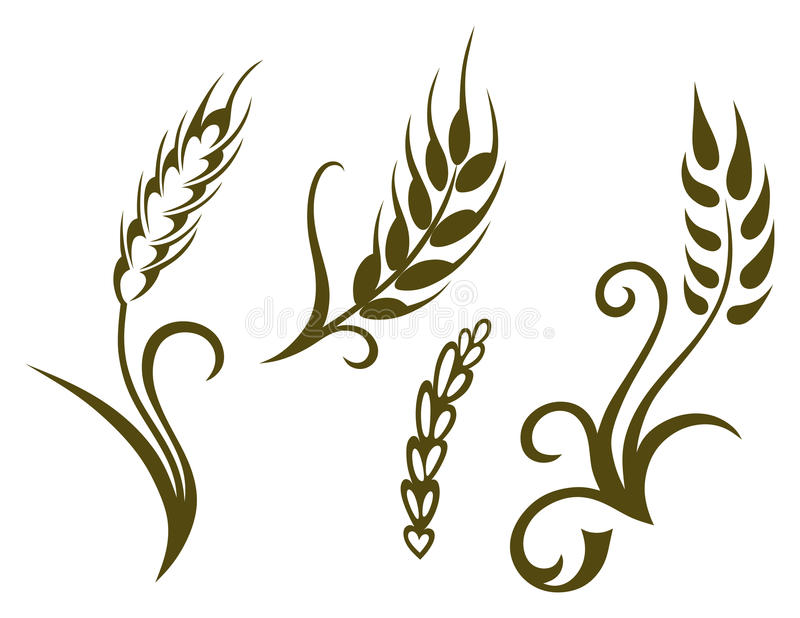 Wheat and rye vector illustration
