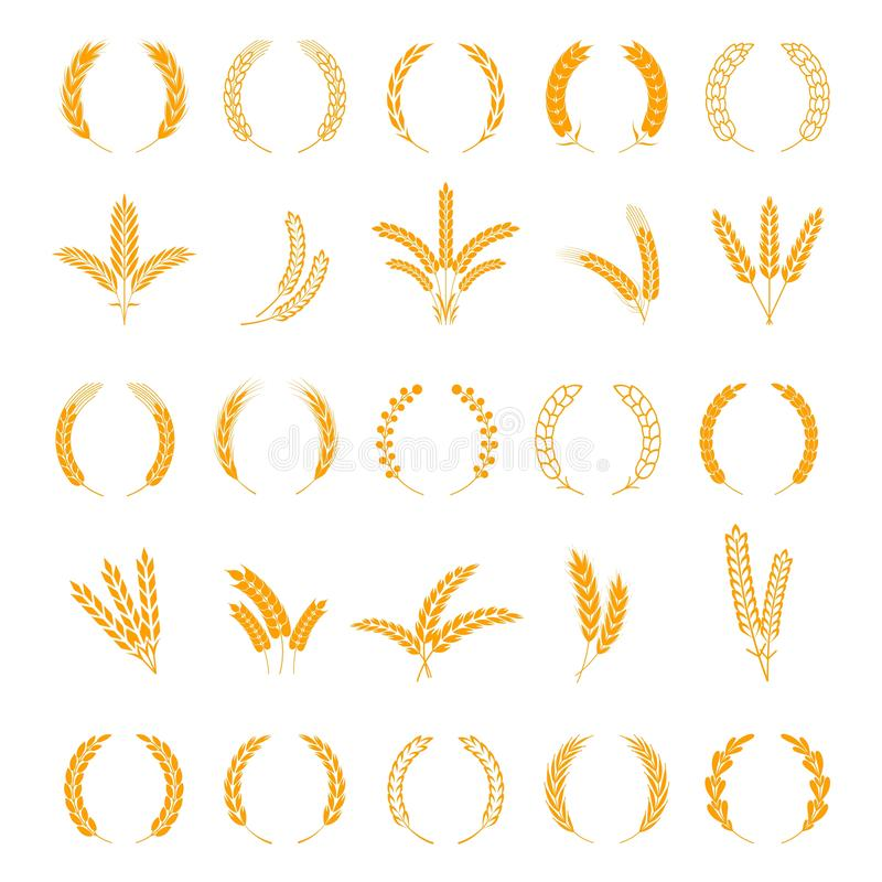 Wheat and rye ears. Harvest barley grain, growth rice stalk. Field cereal. Wreath spikes and stalks vector elements. Wheat and rye ears. Harvest barley grain vector illustration