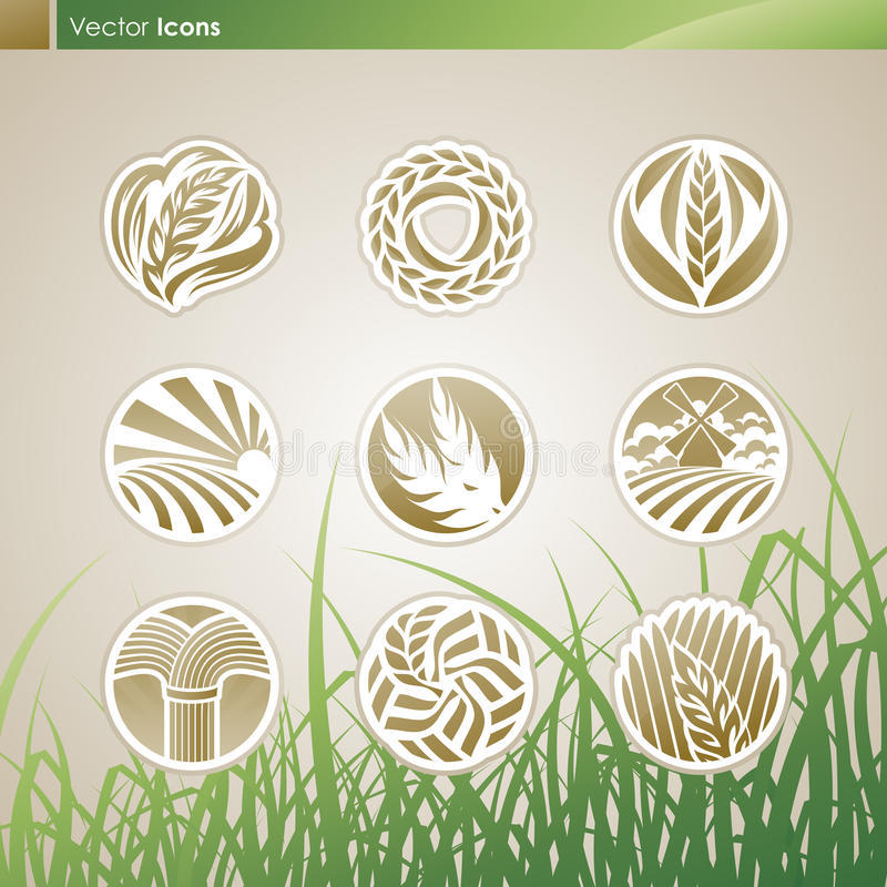 Wheat and rye. Vector logo templates set. Elements for design. Icon set