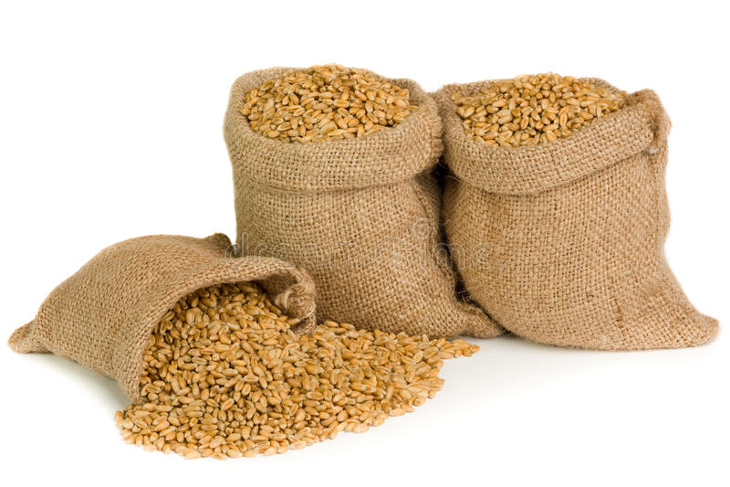 Wheat seed stock photo