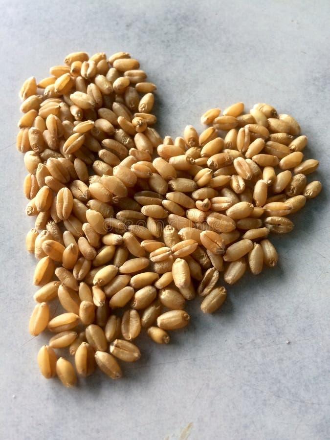 Wheat royalty free stock photo
