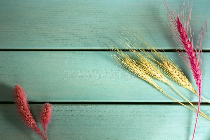 Wheat spike on blue wooden board background, top view and copy space image. Closeup photo of wheat spike on blue wooden board background, top view and copy space royalty free stock photography