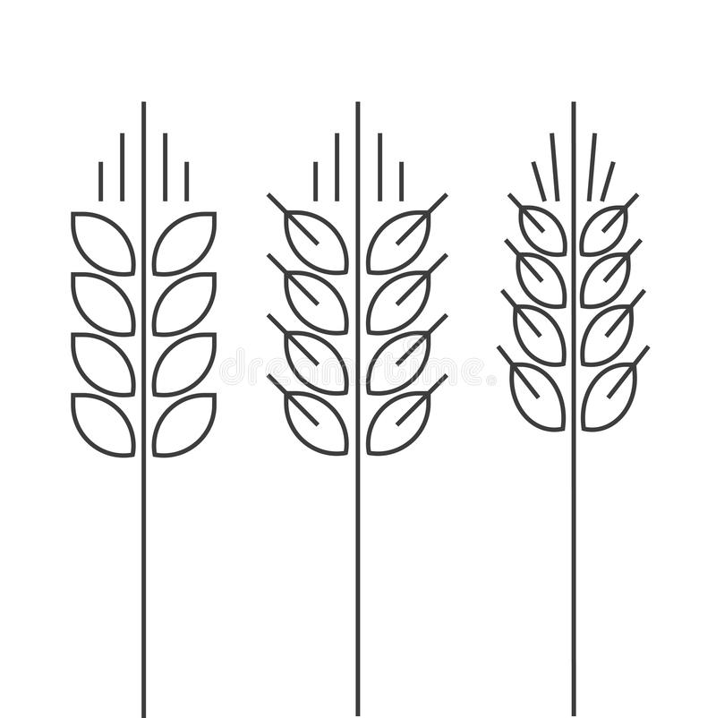 Free Wheat Spike Vector Icons Set Isolated Outline Style Spica Royalty Free Stock Image - 75638256