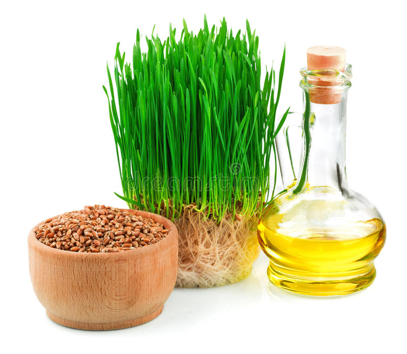 Wheat sprouts, wheat seeds in the wooden bowl and wheat germ oil. Wheat green sprouts, wheat seeds in the wooden bowl and wheat germ oil isolated on white stock photo