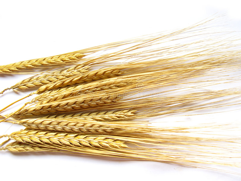 Wheat Stalks royalty free stock photos