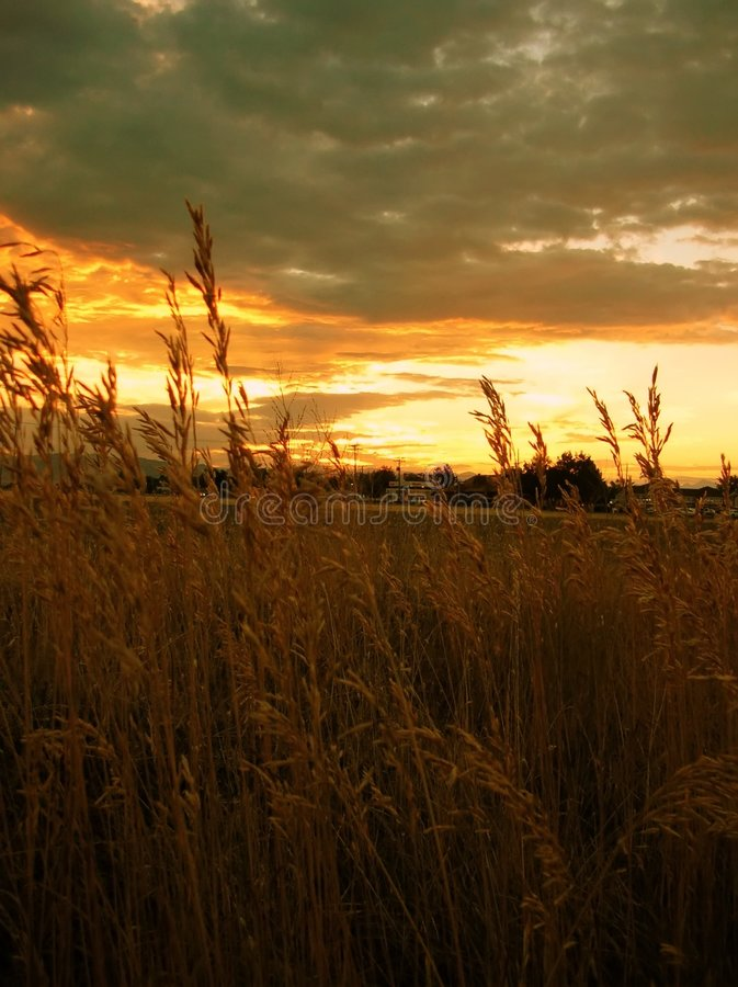 Download Wheat At Sunset Royalty Free Stock Image - Image: 193786