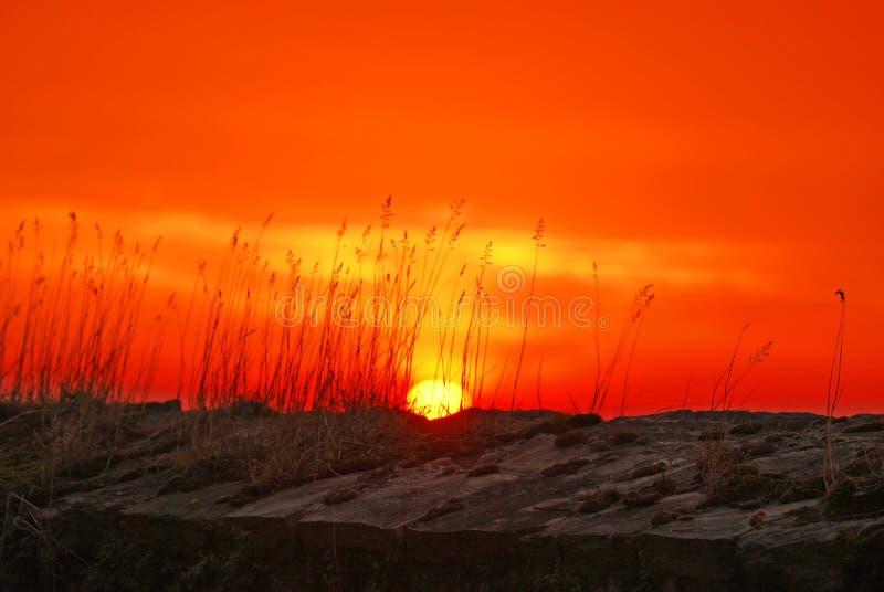 Wheat During Sunset Free Public Domain Cc0 Image