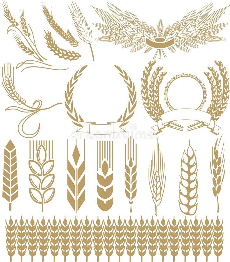 Wheat vector royalty free illustration