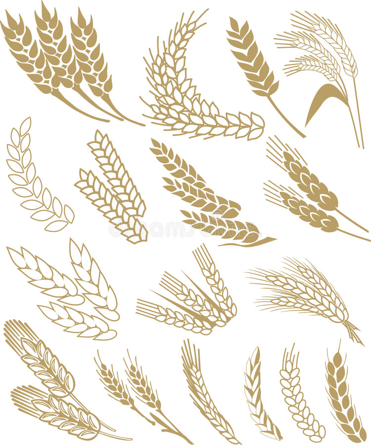 Download Wheat vector stock vector. Illustration of background - 6519592