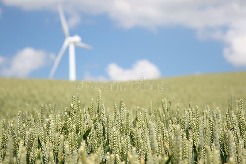 Wheat and wind turbine stock image