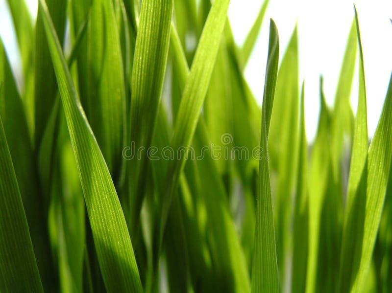 Wheat1 stockbilder