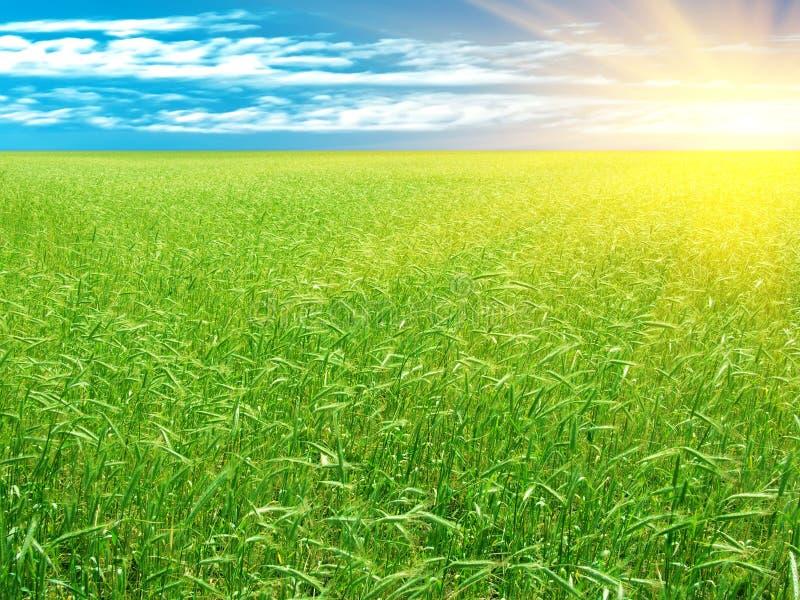 Wheaten field stock photos