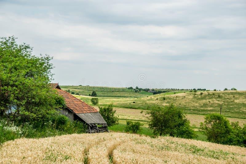 Wheatfield и старая хижина стоковая фотография rf