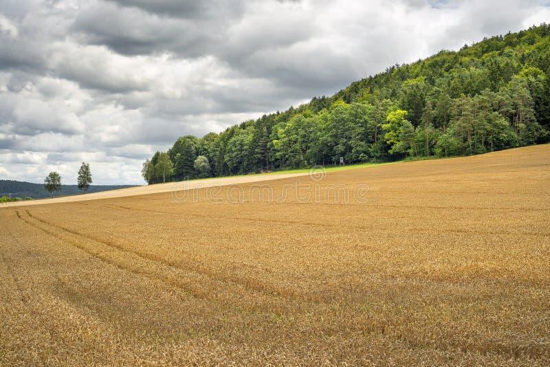 Wheatfield in Franconia Duitsland stock foto's