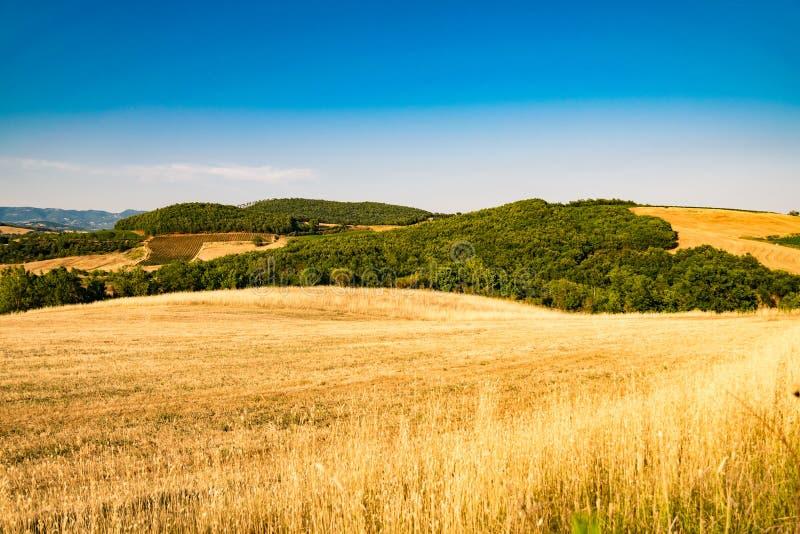 Wheatfield onder de heuvels van Toscanië in Italië royalty-vrije stock afbeelding