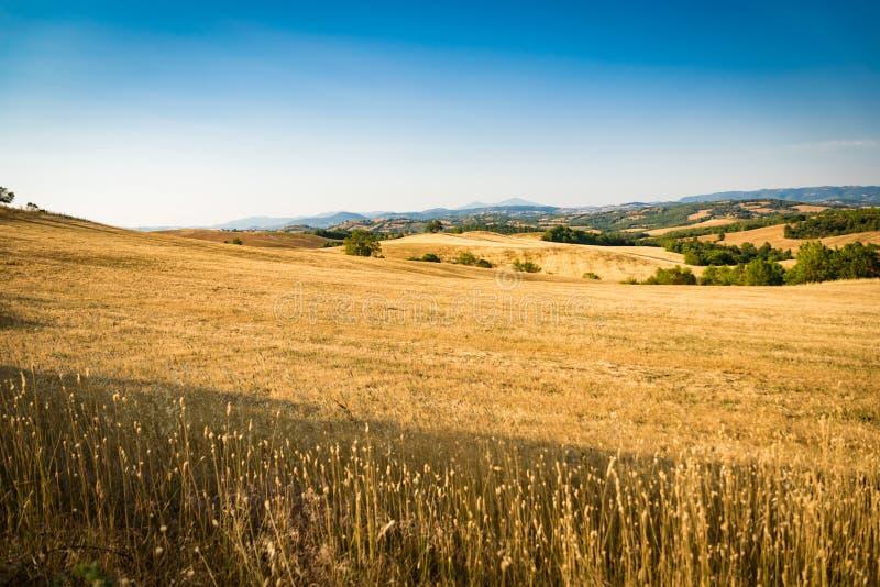 Wheatfield onder de heuvels van Toscanië in Italië stock afbeelding