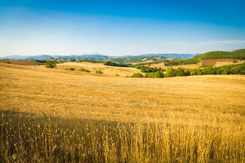 Wheatfield onder de heuvels van Toscanië in Italië royalty-vrije stock afbeeldingen