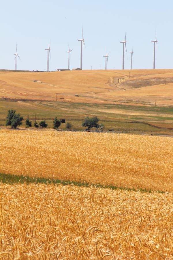 Wheatfields和Windfarms 图库摄影