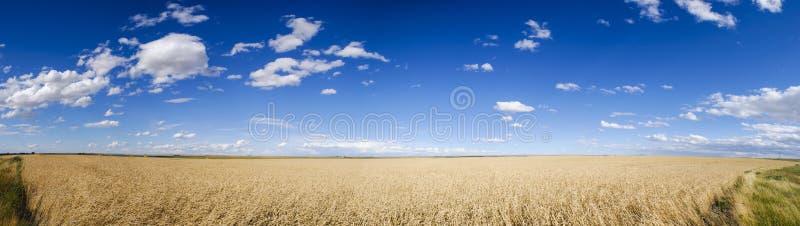 Wheatfields стоковая фотография rf