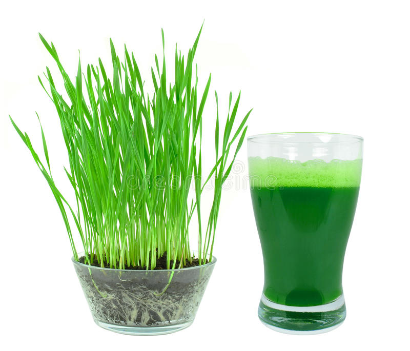 Wheatgrass汁液 免版税库存照片